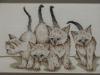 Koty sjamskie - Iwona Strzemieczna