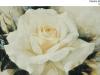 pilecka-roza